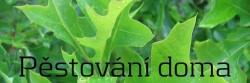 Pěstování doma v bytě, sklepě, pokoji, za oknem nebo na půdě - články, informace, návody pro pěstitele
